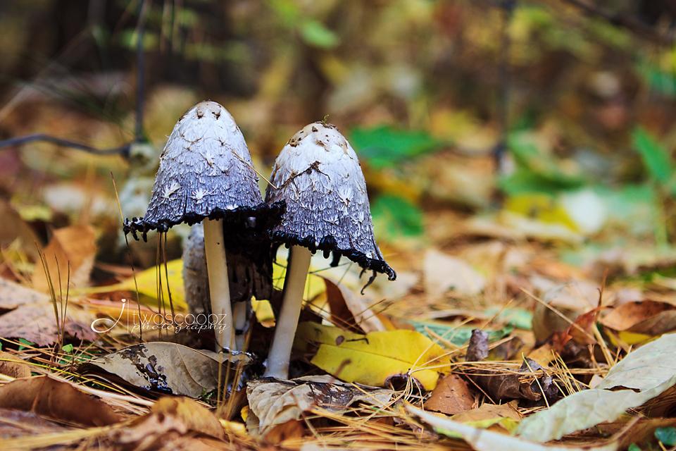 fall fairy houses