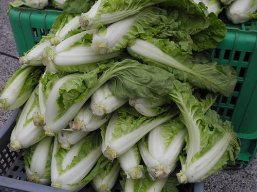 氮元素雖為蔬菜重要養分,但是過度施肥會讓硝酸鹽累積在蔬菜中,也會破壞環境。