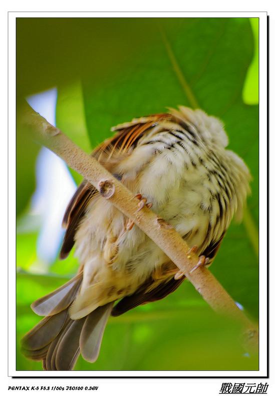 麻雀雖然不罕見-但是吸取相當寶貴經驗值
