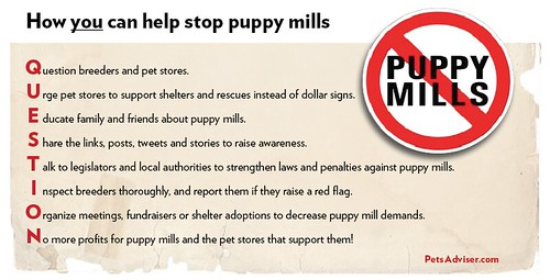 Stop Puppy Mills - warning signs