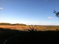 Mason Neck - Swamp View