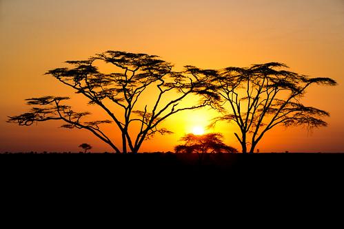 africa sunrise landscape tanzania mara serengeti acacia acaciatree