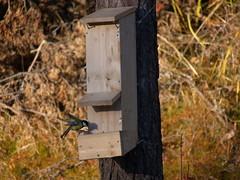 Ny fuglemater