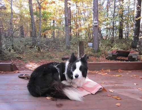 毛布で暖まるランディ 2012年10月24日7:39 by Poran111