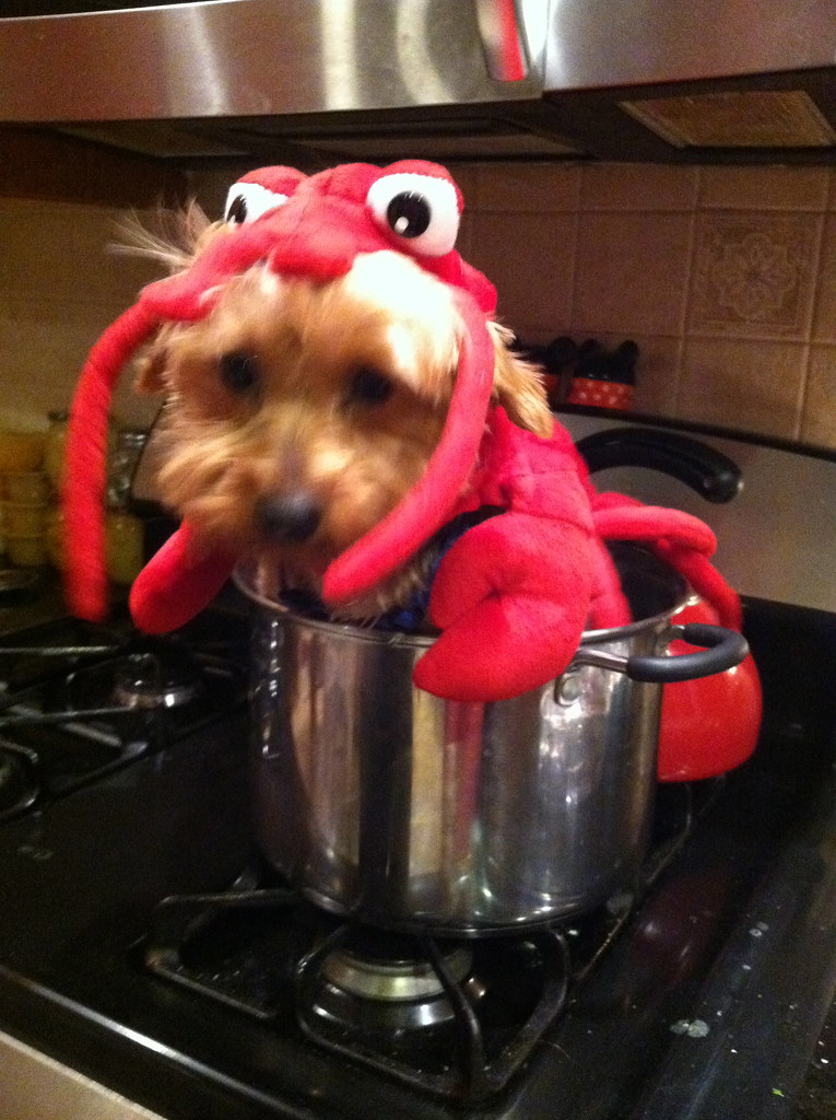 Lobster Dog In A Pot Terms Of Use Please Consider Linking Flickr