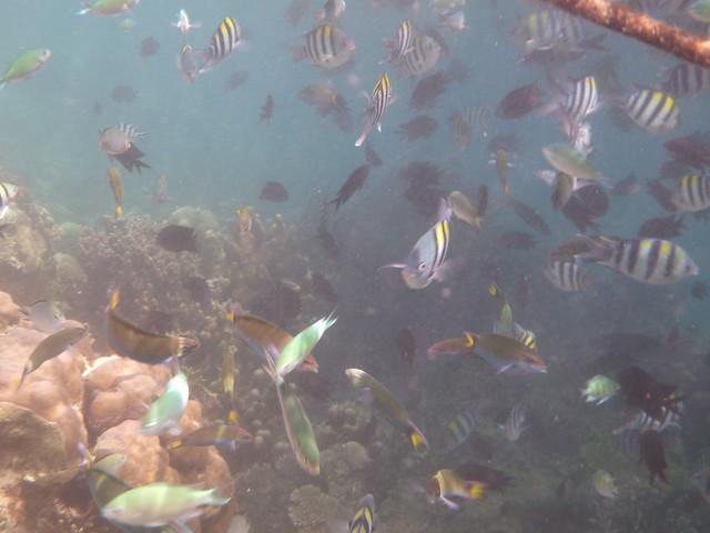 魚兒們很聰明~知道聚集在船旁邊說不定會有食物吃