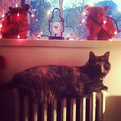 Cat on a Hot Tin Radiator