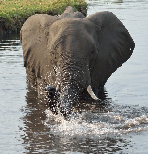 Badande Elefant