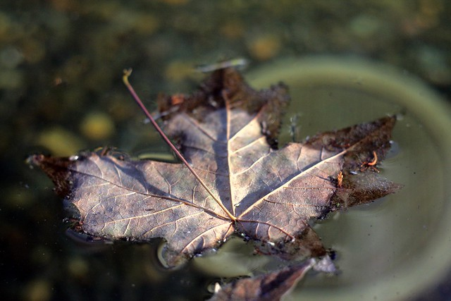 leaf, dreamer fountain