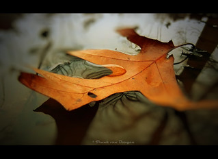 FV Flickr Top 5; 2-32 Eervolle vermelding: Leaf