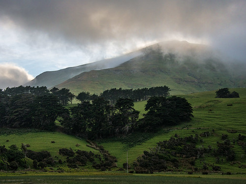 trees cloud mist bravo nz otago dunedin peninsula