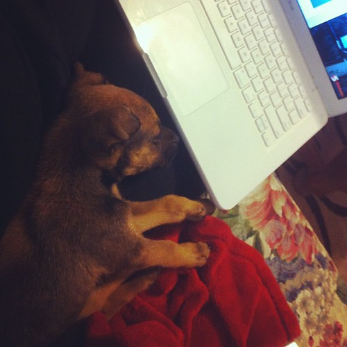 A new way to get work done. #dog