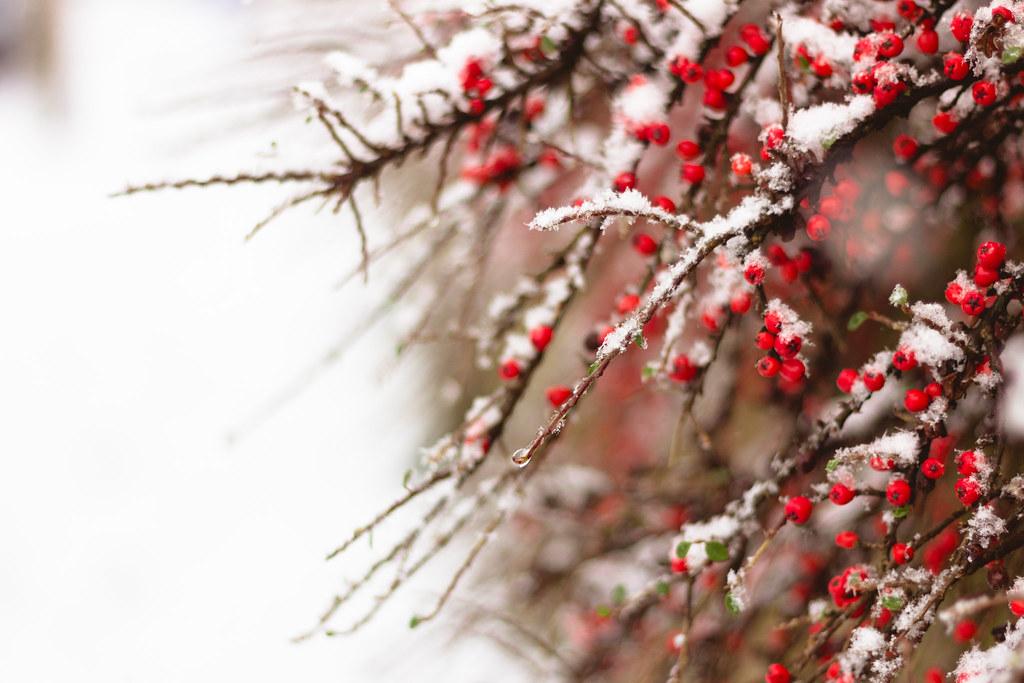 Snow 2013 II