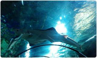 Akurium SeaWorld