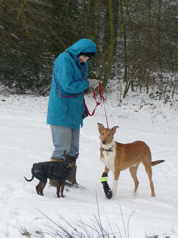 Jean and the dogs.