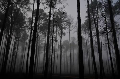 blackandwhite burroughspark fog texas winter