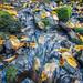 Silberbachtal # 11 - Wasser zwischen Steinen und Herbstlaub - Water runs between rocks and autumn leaves