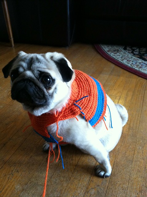 wip crochet sweater for agamemnon my pug