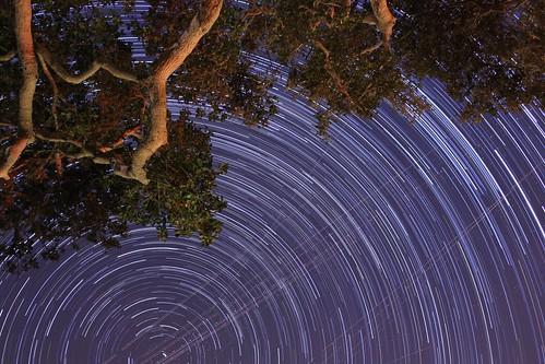Starry Starry Oak