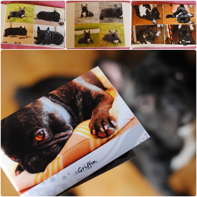 Mini-livre photos de Griffin, bouledogue français