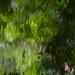 Reflet d'herbes et de fleurs...!!! by Denis Collette...!!!