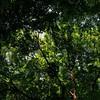 Photo:朝日を浴びて輝いている山道の峠の森を抜けて、通所してる障害者就労支援B型事業所へ向かう。福島県郡山市と田村郡三春町の境の森で…。 #snapseed By Atsushi Boulder