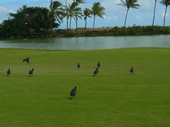 Kauai Lagoon Golf Club 389