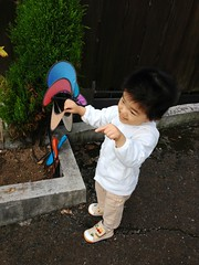 朝散歩 - とらちゃん (2012/10/13)