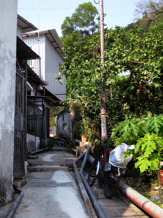 三家村散步