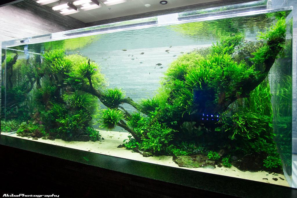 sumida-aquarium#4