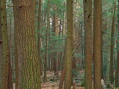 Joyce Kilmer Natural Area (Revisited) (4)