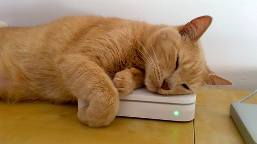 Cat loves AirPort Extreme