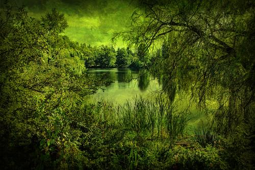 texture pond bog topaz shorelineartsfestival neighya ronaldbogpark