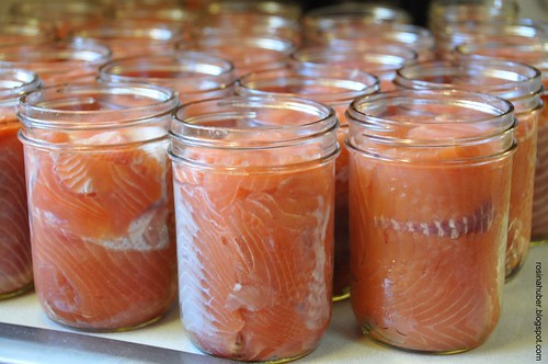 Salmon Ready for Canning