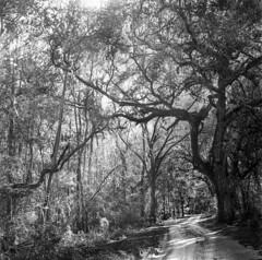 Lake Townsend Road
