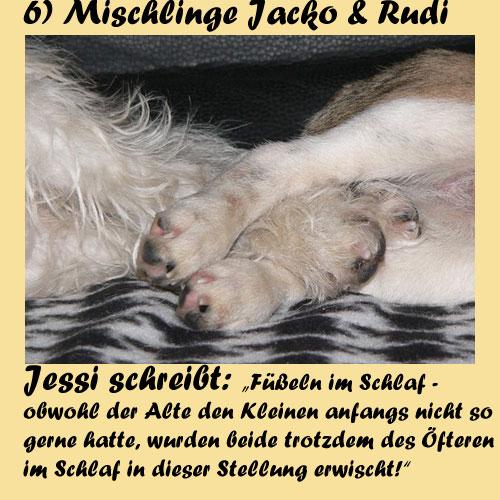 6-Mischlinge-Jacko-Rudi