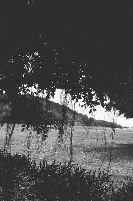 Cairns_treebw_jamiepilgrim