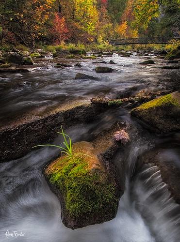 park autumn ny fall grass canon moss rocks state falls foliage cascade 1740l chittenango adambaker 5dmkii