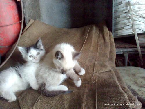 Stray kittens 2