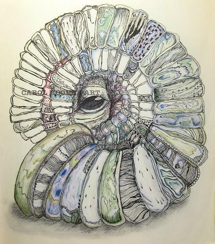 Spiral shell 002