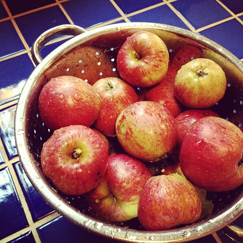 from the backyard. (!!!!) baked apples tonight! oh, yeah.