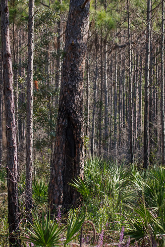 usa unitedstates florida parks fl panamacitybeach locations conservationpark