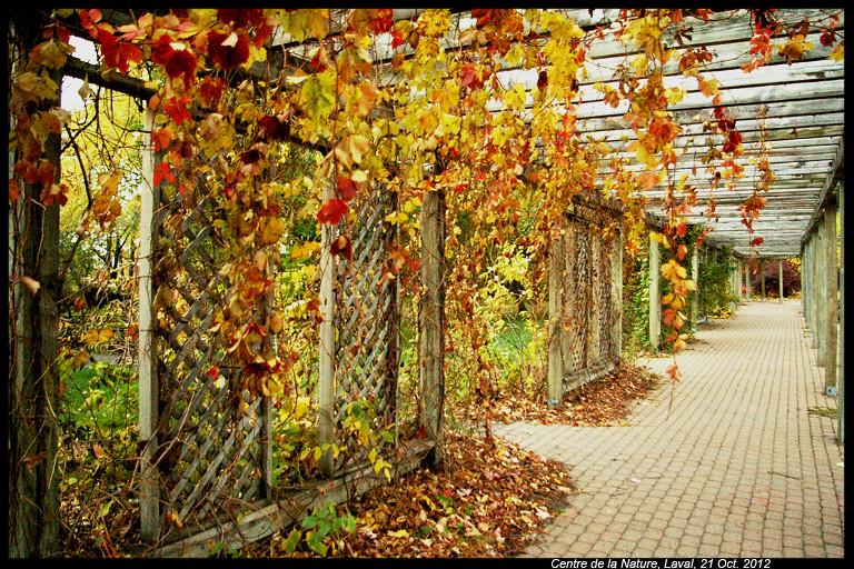 Vos photos d'automne  8114420297_0a2565f467_b