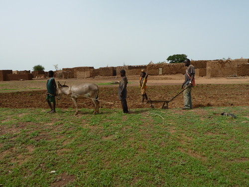 africa village farming donkey westafrica agriculture climatechange adaptation burkinafaso cgiar foodsecurity ccafs amkn cgiarclimate