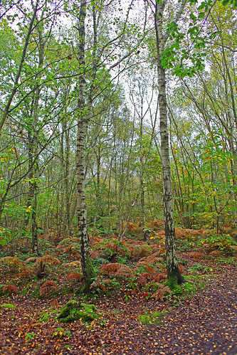 Blean Woods Kent by Kinzler Pegwell