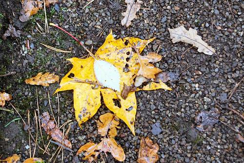 Clingendael herfst 2012