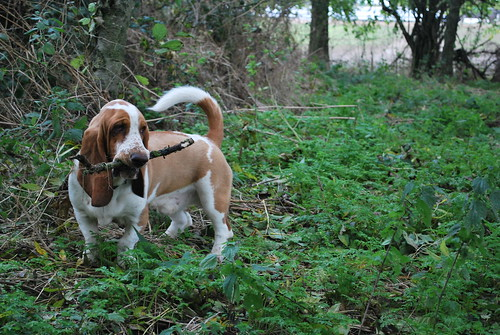 bailey with stick in the forrest at work.