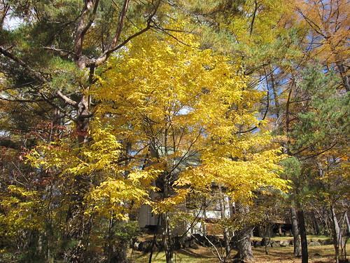 別荘地の紅葉  2012.10.29 by Poran111