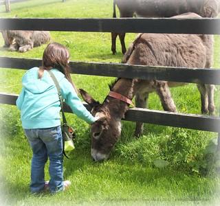 At the Donkey Sanctuary in Ireland