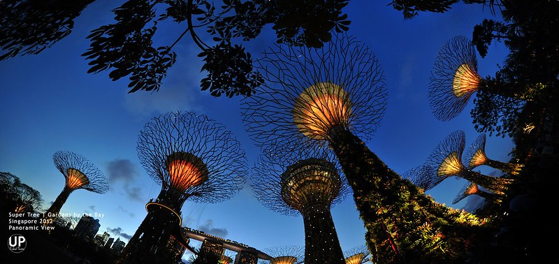 Gardens by the Bay_Super Tree